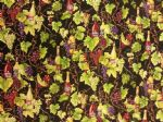 NEW! WINES AND VINES - Fabric 100% Cotton - Price Per Metre